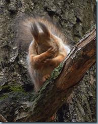 maman d ecureuil
