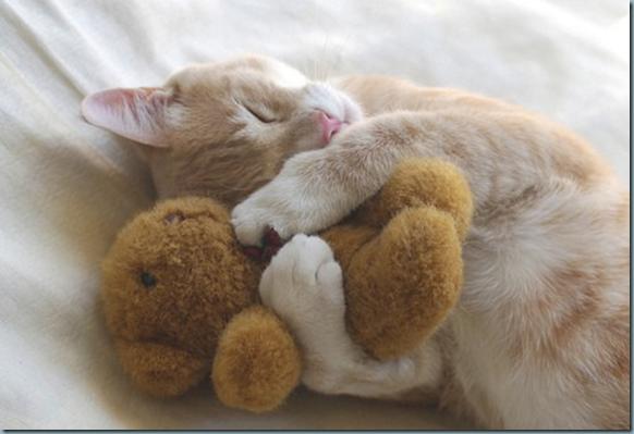 chat et nounours