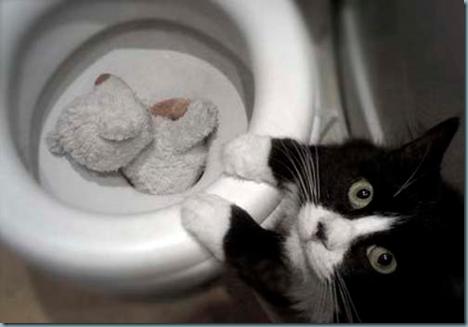 Chat recherché