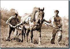 paysans interdits de semences