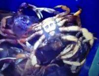 Crabe ben laden