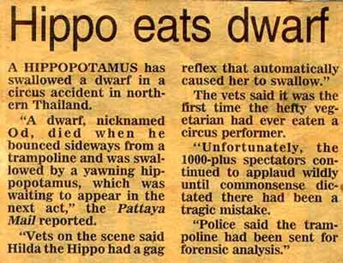 Hippo_nain_article